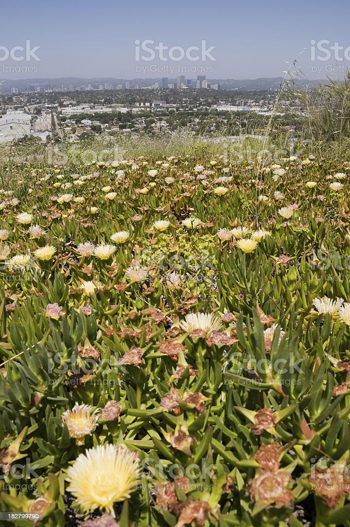 spring flowers in park  Los Angeles royalty-free stock photo