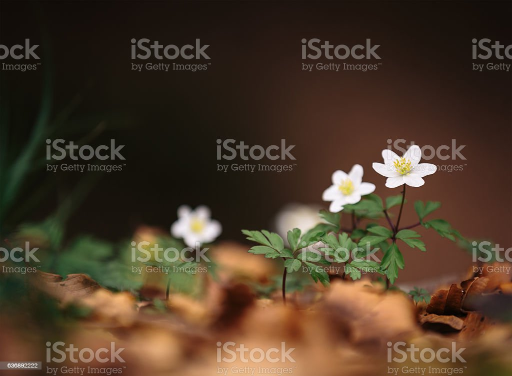 Spring Flowers In The Forest stock photo