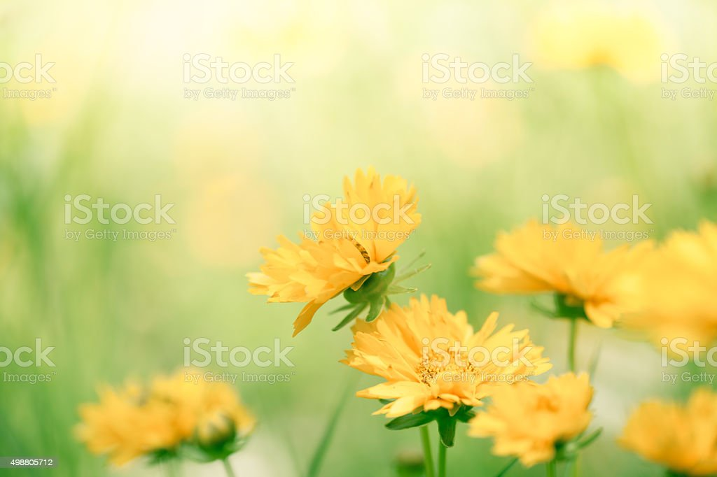 Spring flowers in the meadow stock photo