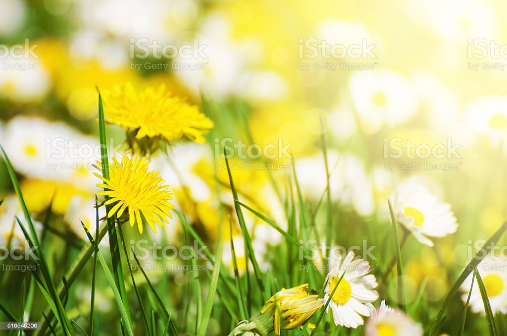 Spring flowers meadow stock photo