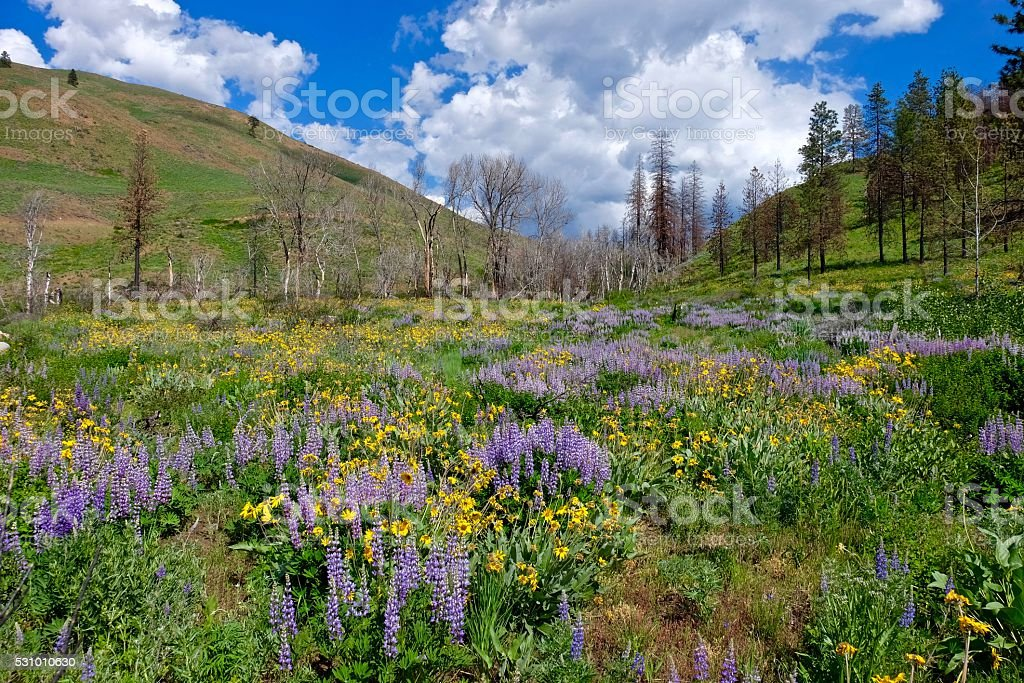 Spring Flowers, Meadows, Hills, Blue Sky and Clouds. stock photo