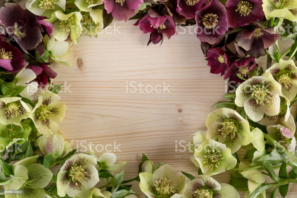 Spring flowers natural background frame greeting card. Top view, copy space stock photo