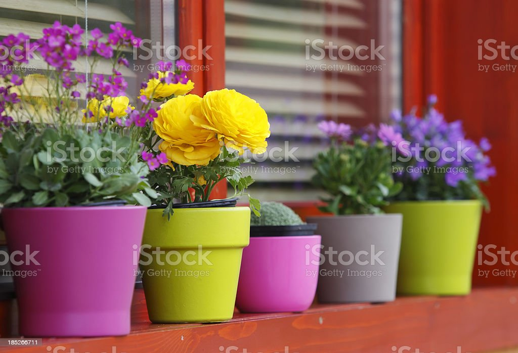 Spring flowers on the balcony stock photo