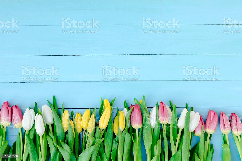 spring flowers on the Board stock photo