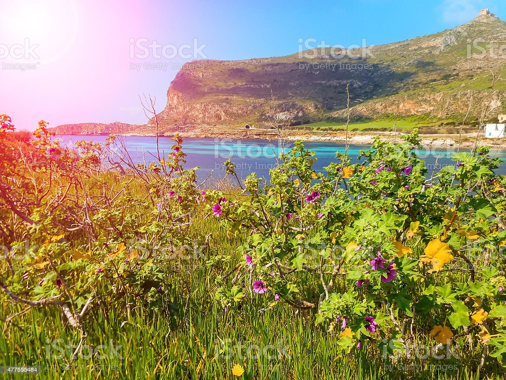 Spring flowers on the cliffs of the Mediterranean Sea stock photo