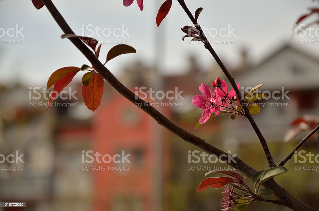 Spring Flowers on Tree in Residential Area stock photo