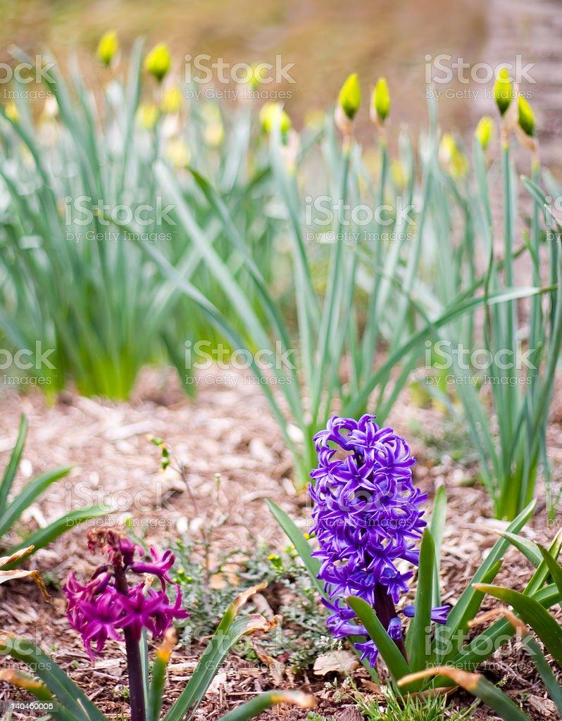 Wiosna kwiaty zbiór zdjęć royalty-free