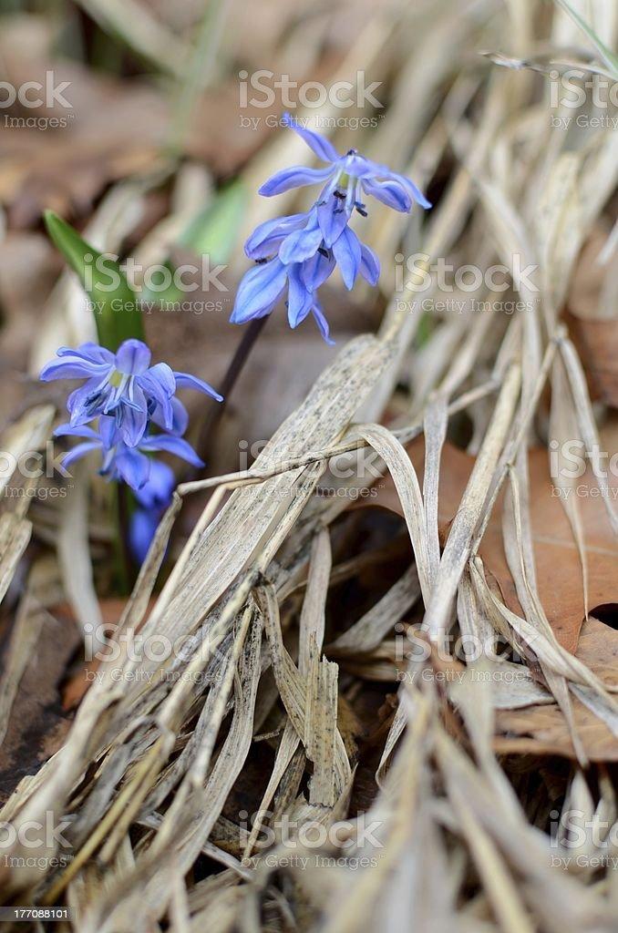Flores de primavera foto de stock libre de derechos