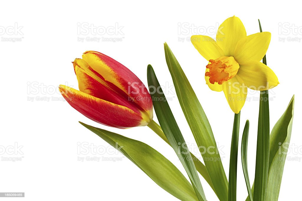 Spring Flowers. royalty-free stock photo