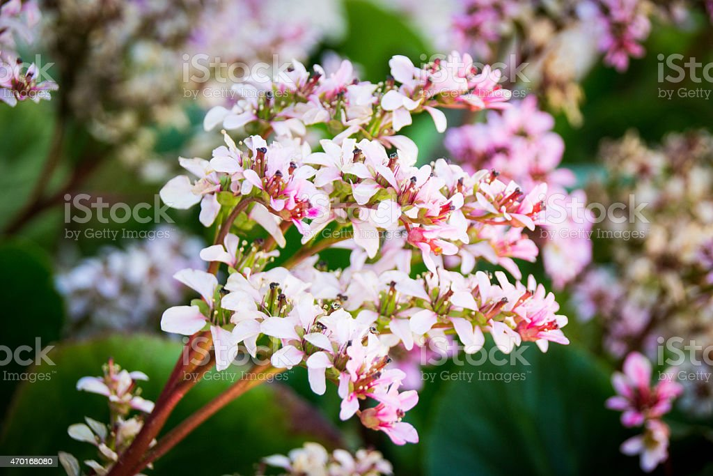Flores de primavera stock photo