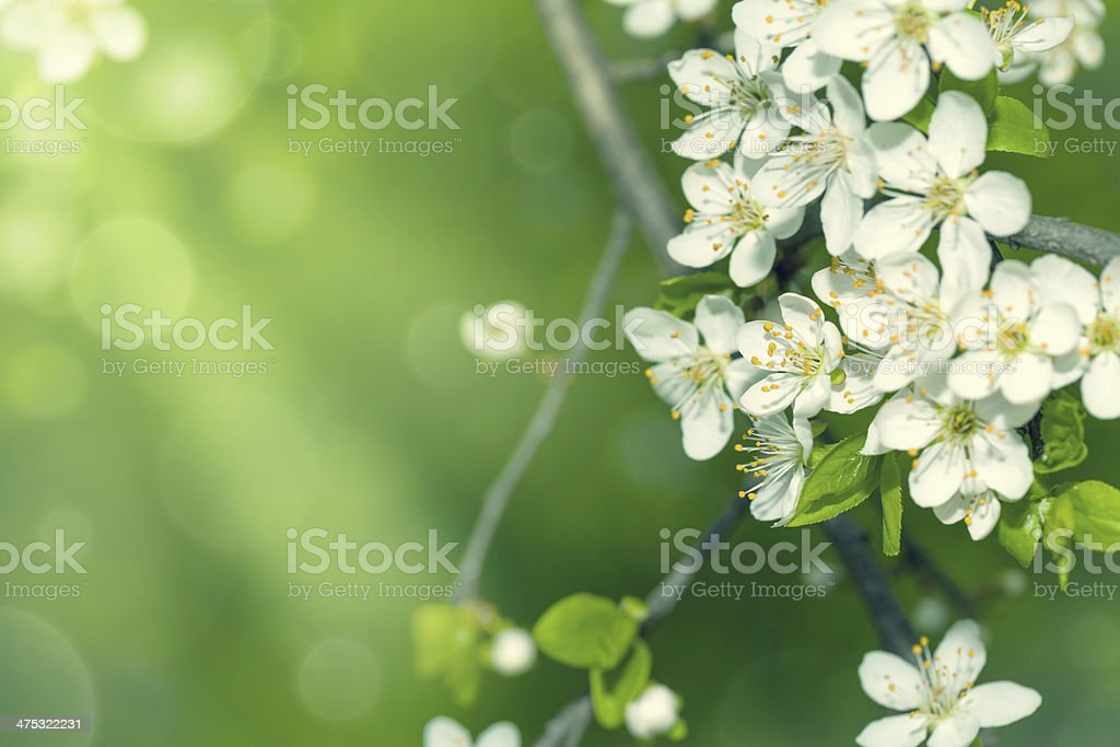 Spring Flowers stock photo