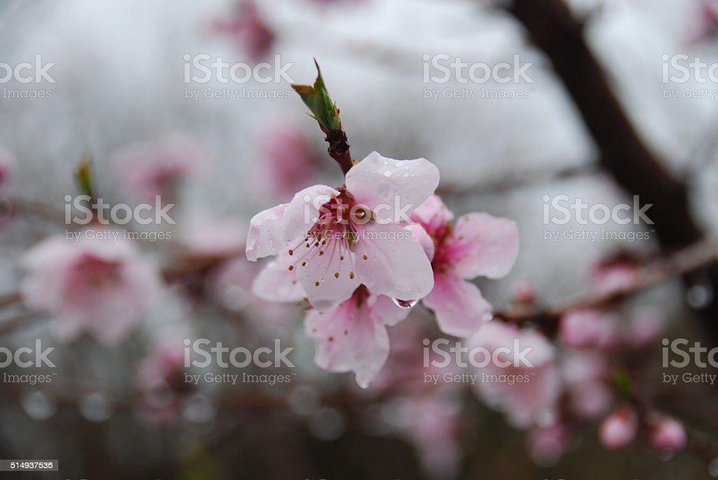Flores da primavera foto royalty-free
