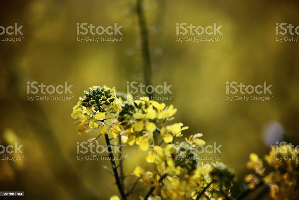 Весенние цветы Стоковые фото Стоковая фотография