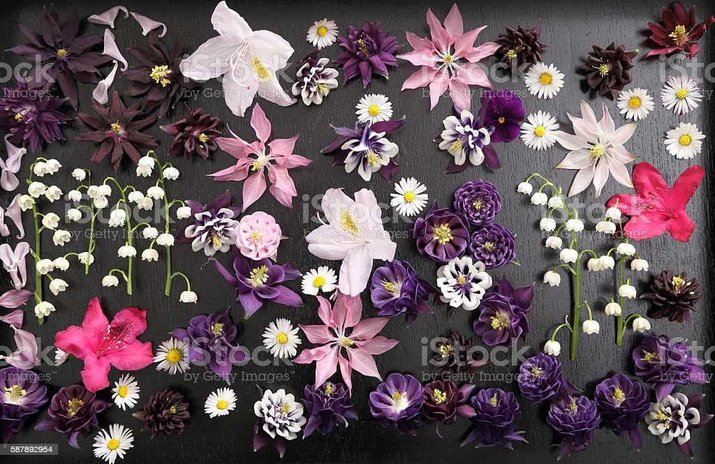 Spring flowers. stock photo