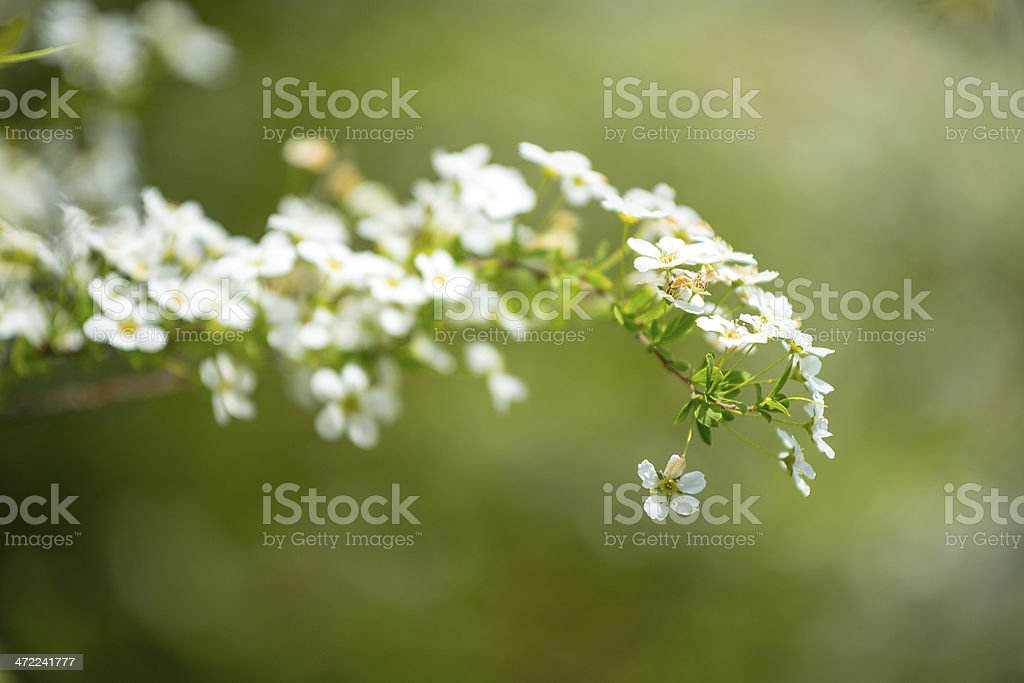 Spring flowers selective focus royalty-free stock photo