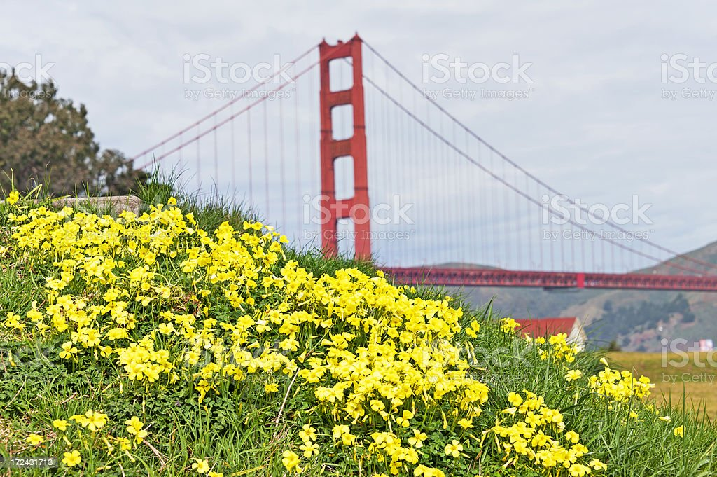 Spring Flowers with Bridge royalty-free stock photo