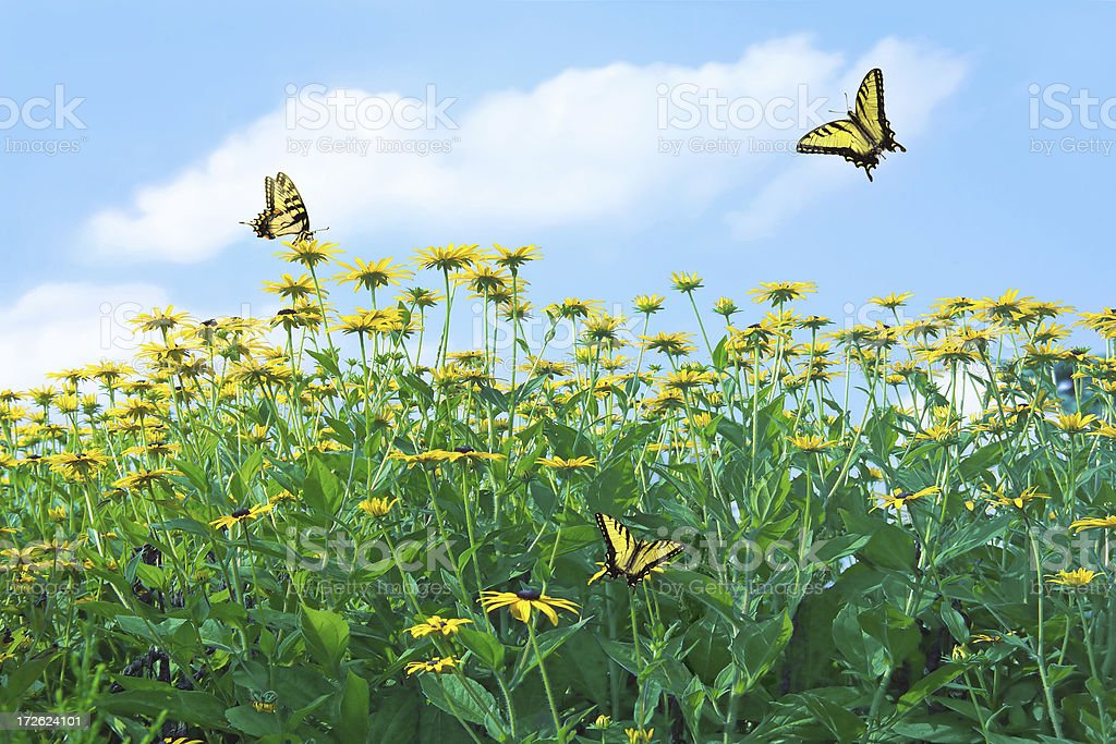 Spring flowers with butterflies royalty-free stock photo