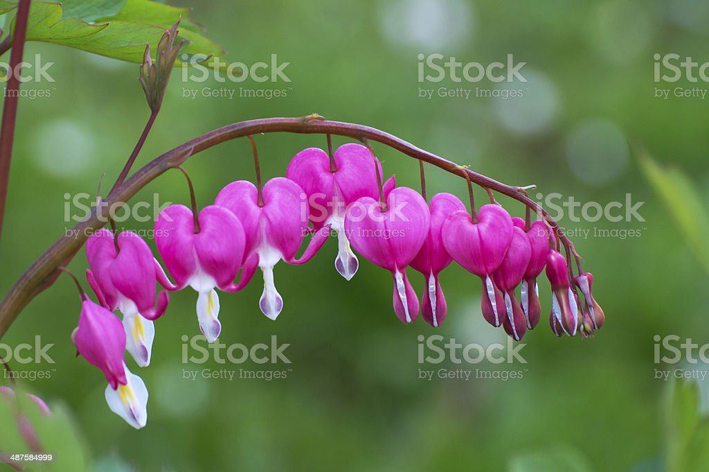 スプリング flowers2.2 ロイヤリティフリーストックフォト