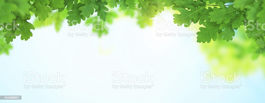 Spring Foliage Panoramic stock photo