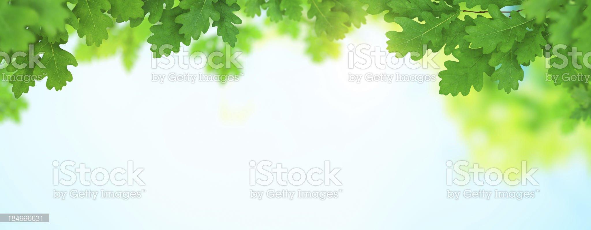 Spring Foliage Panoramic royalty-free stock photo