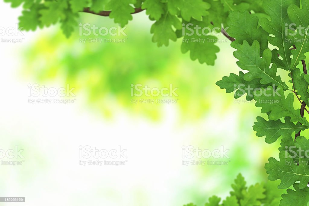 Spring Foliage royalty-free stock photo