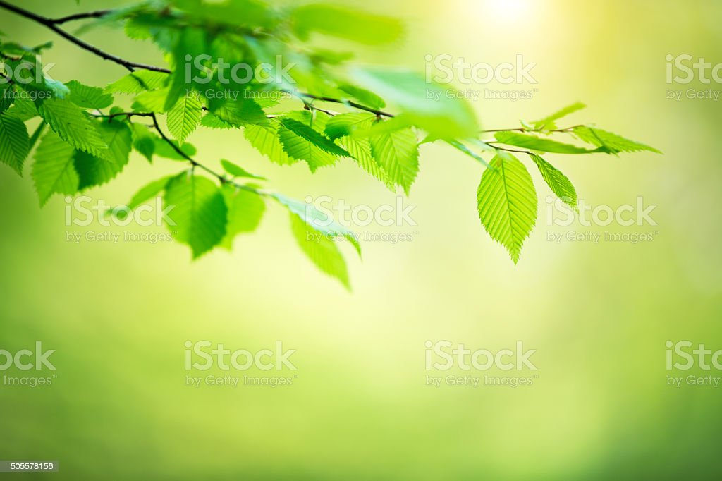 Spring Foliage stock photo