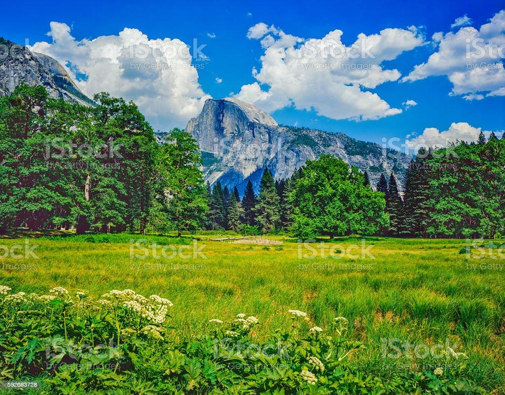Spring foliage with Half Dome Yosemite National Park, Ca stock photo