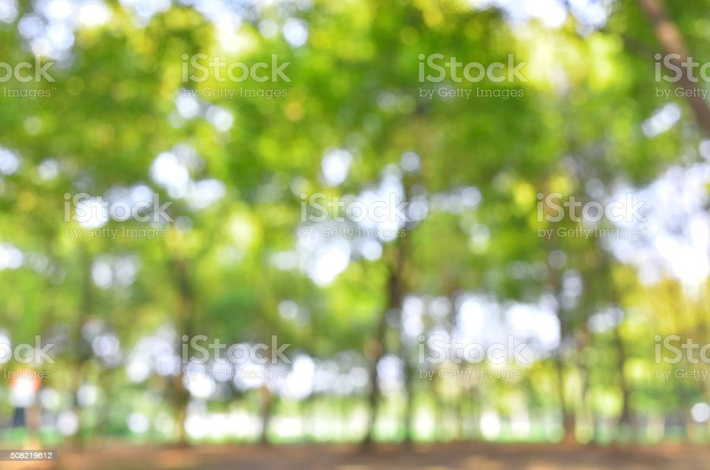 Spring forest defocused abstract background stock photo