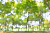 Spring forest defocused abstract background