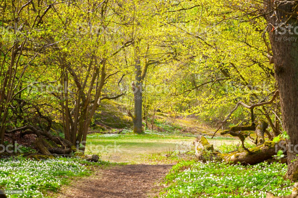 Spring forest glade royalty-free stock photo