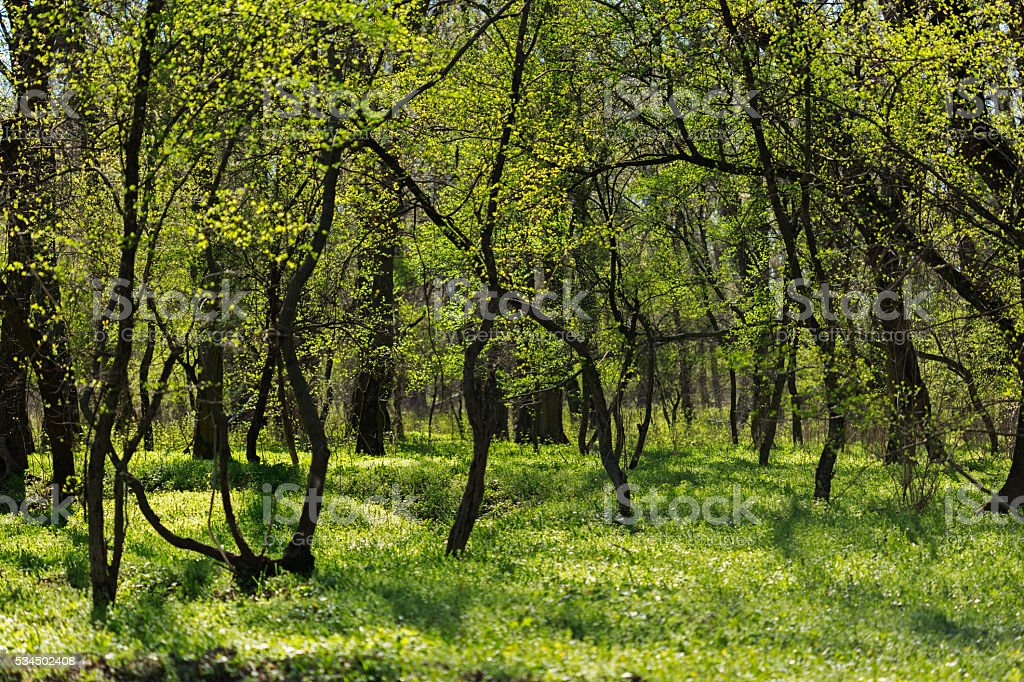 Spring forest glade stock photo