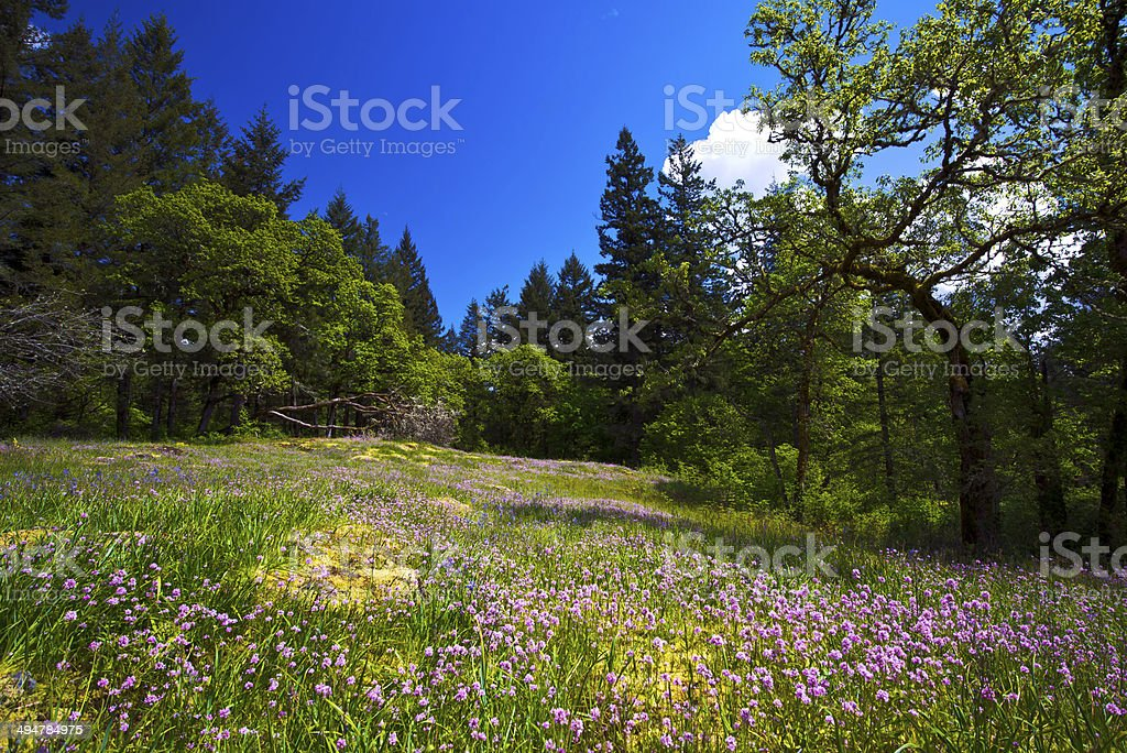 Spring Forest Glade with pink wildflowers and trees stock photo