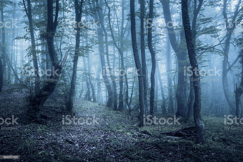 Spring forest in fog. Beautiful natural landscape. Vintage style stock photo