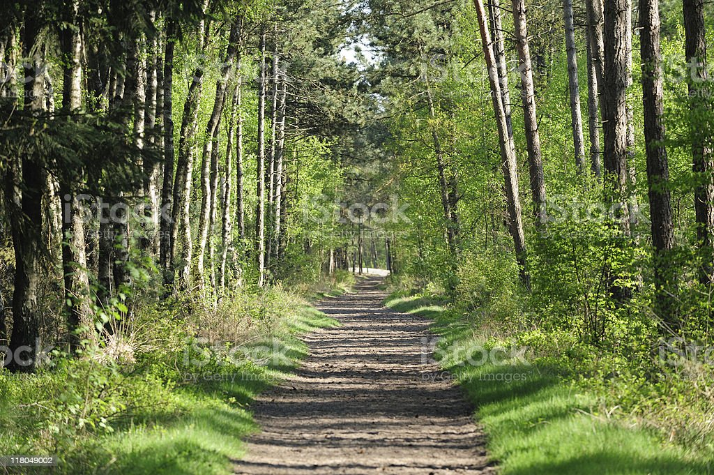 Spring forest in the Netherlands with dirt path royalty-free stock photo