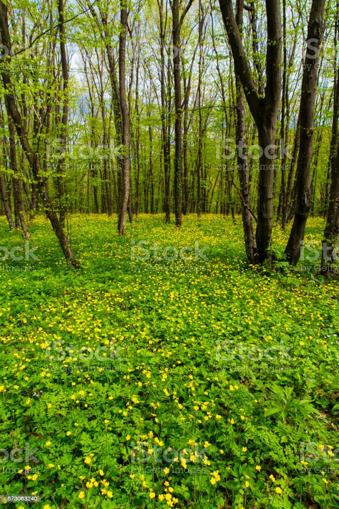 Spring forest landscape stock photo