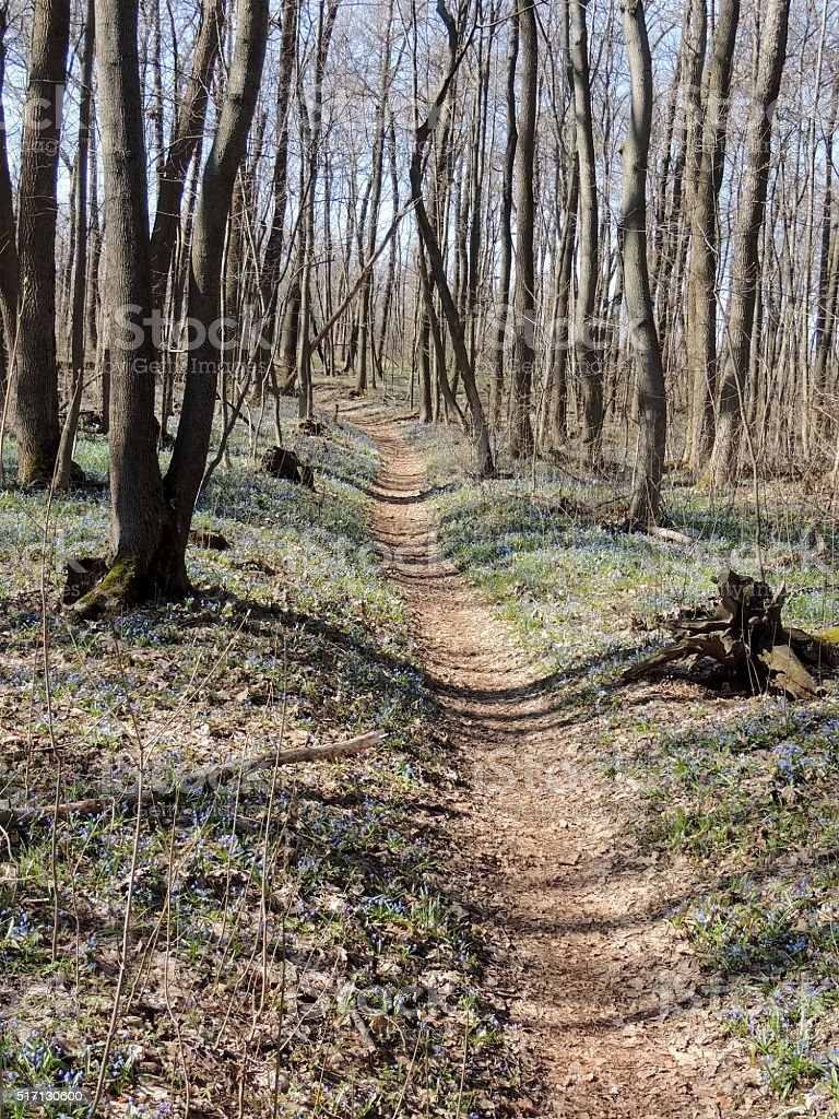 Spring forest path among snowdrops stock photo