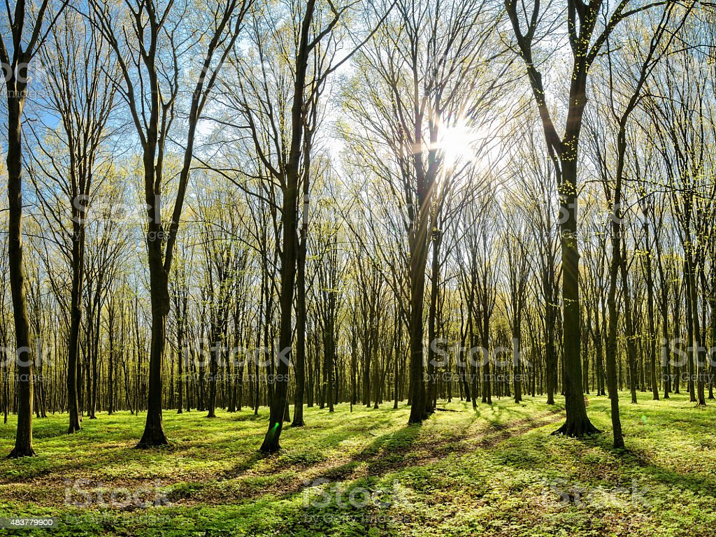 Spring forest stock photo