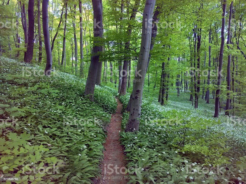 Bosque de resorte foto de stock libre de derechos