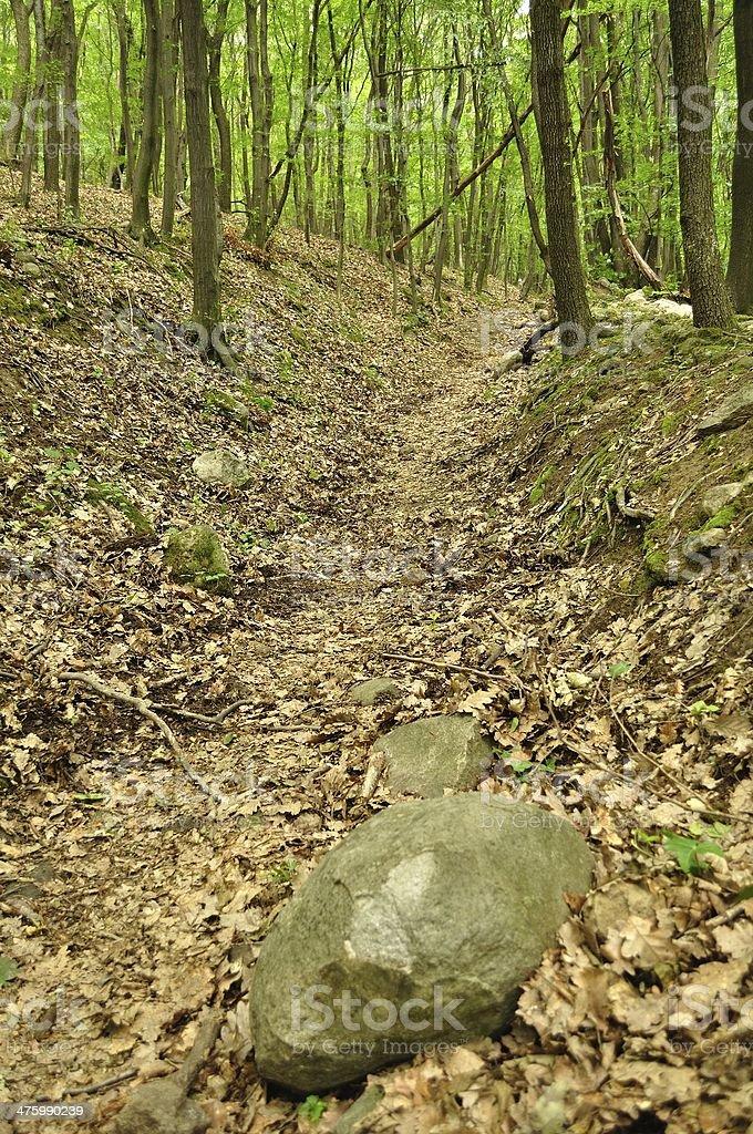 Wiosna lasu scena z duży Kamień w prawym dolnym rogu zbiór zdjęć royalty-free