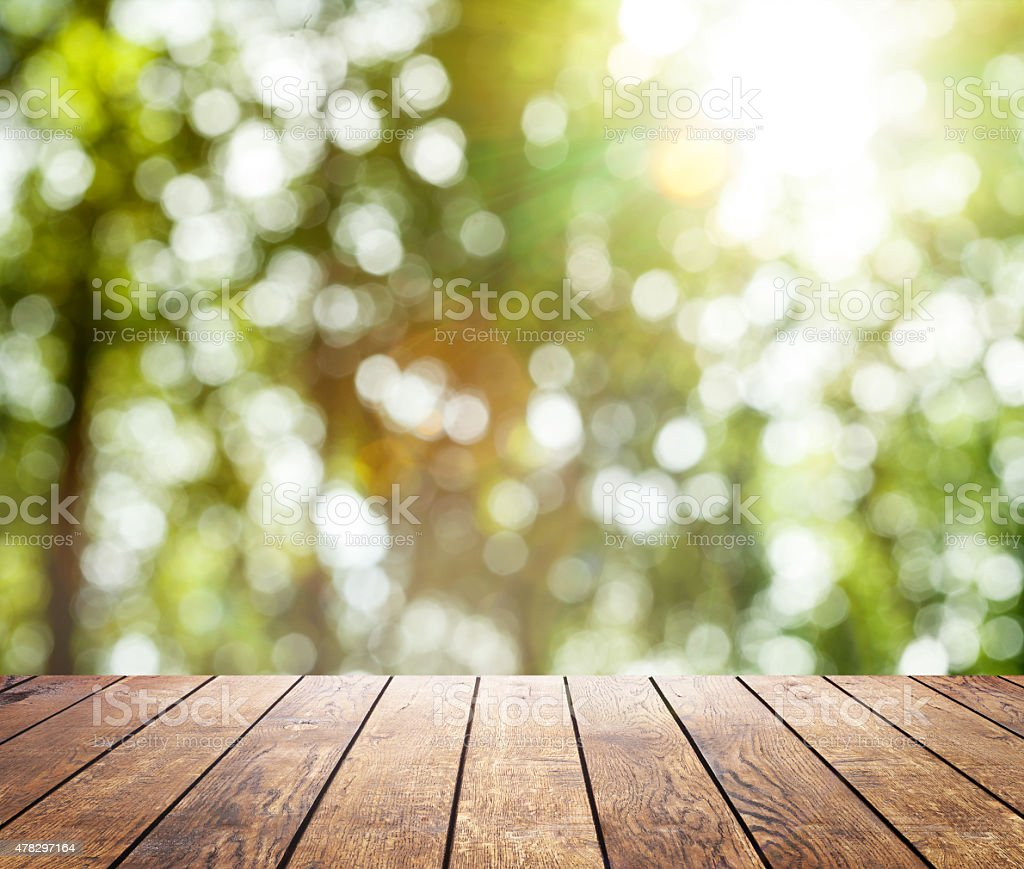 spring forest trees stock photo