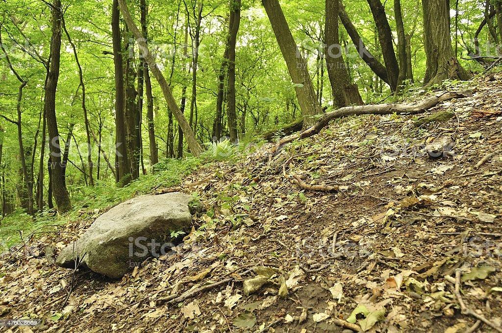 Wiosna lasu z duży Kamień w lewym dolnym rogu zbiór zdjęć royalty-free