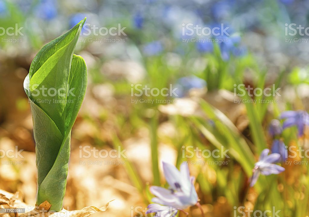 Spring Fresh sprout royalty-free stock photo