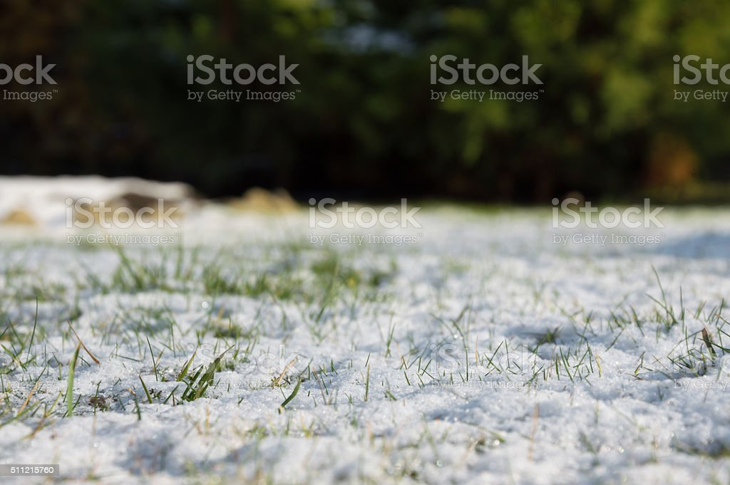 Spring frost, green grass covered with white snow. stock photo