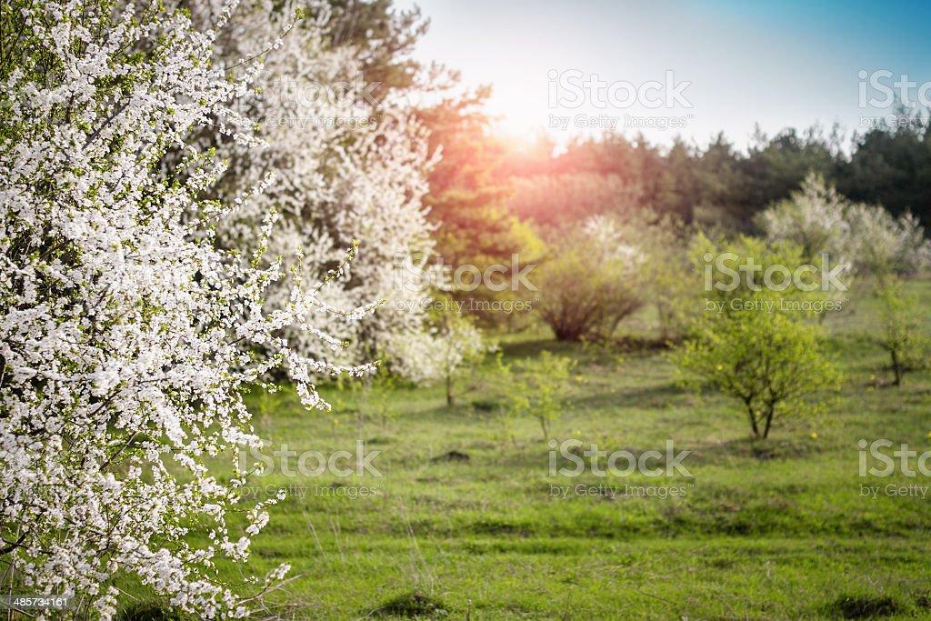 Jardin de printemps au lever du soleil photo libre de droits