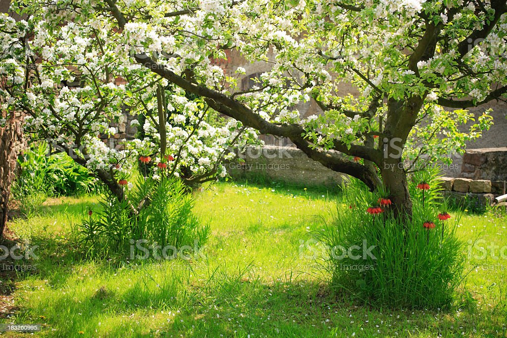 Spring Garden royalty-free stock photo