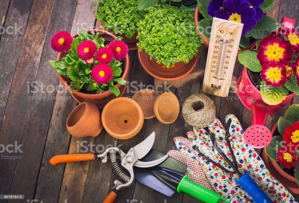 Spring gardening - tools and flowers on the wooden table stock photo