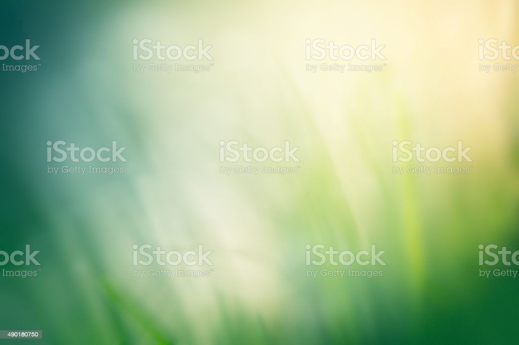 Spring grass defocused background stock photo