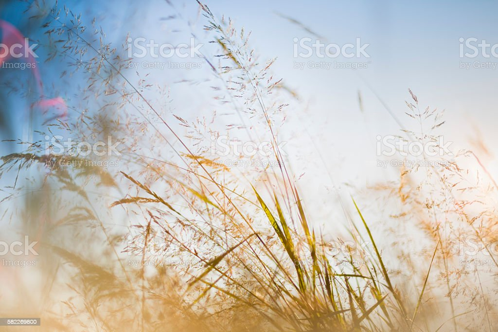 Spring grass in the summer breeze stock photo