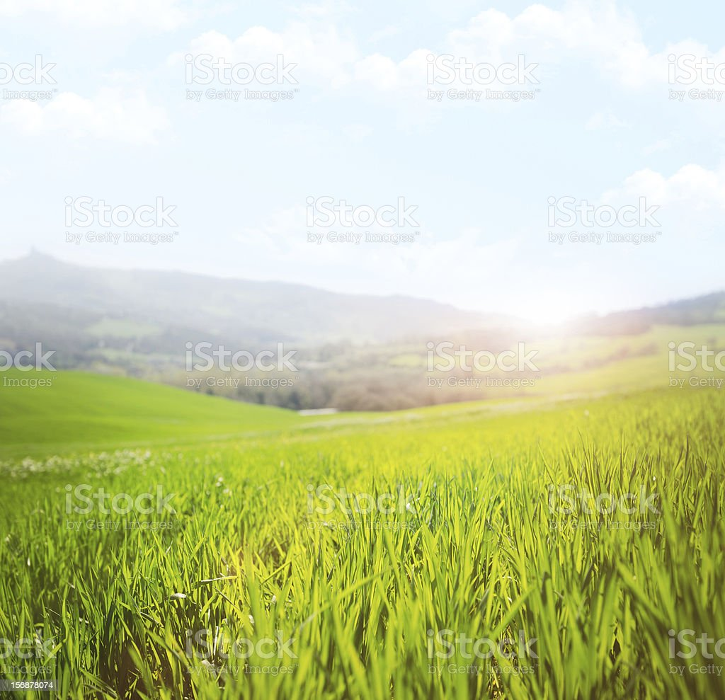 Spring grass landascape at sunsrise stock photo