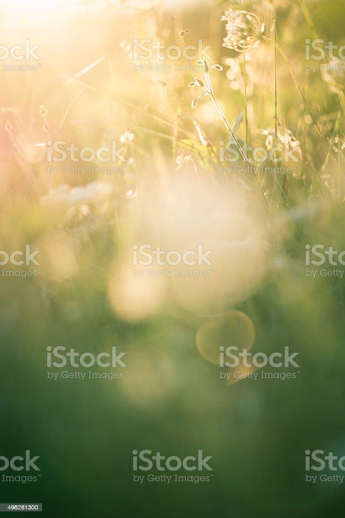 Spring grass stock photo